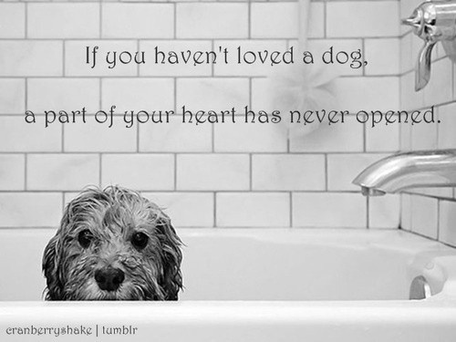 If you havent loved a dog
